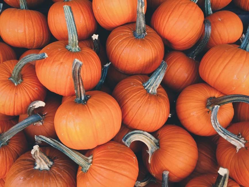 pumpkin halloween social share image 4 frighteningly fab halloween emails