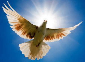 Dove sign of peace