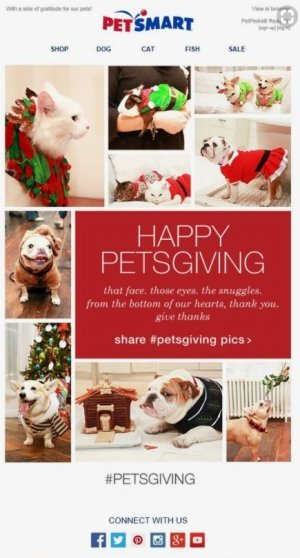 petsmart thanksgiving email marketing